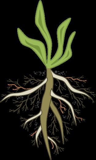 root-cause-analysis-weed